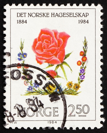 horticultural: NORWAY - CIRCA 1984: a stamp printed in the Norway shows Red Rose, Centenary of Norwegian Horticultural Society, circa 1984