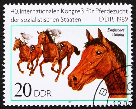 GDR - CIRCA 1989: a stamp printed in GDR shows English Thoroughbred, Breed of Horse, circa 1989