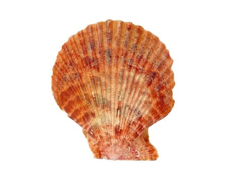 Seashell isolated on white background photo