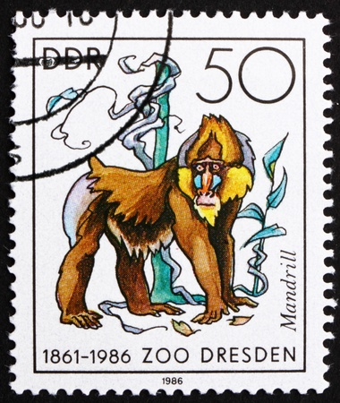 GDR - CIRCA 1986: a stamp printed in GDR shows Mandrill Monkey, Mandrillus Sphinx, 125th Anniversary of Dresden ZOO, circa 1986