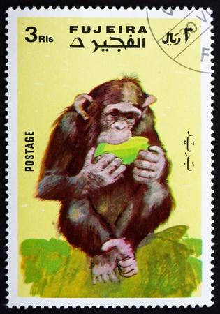 fujeira: FUJEIRA - CIRCA 1972: a stamp printed in the Fujeira shows Monkey, Series Monkeys, circa 1972