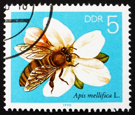 GDR - CIRCA 1990: a stamp printed in GDR shows Apple Blossom, Bees Collecting Nectar, circa 1990