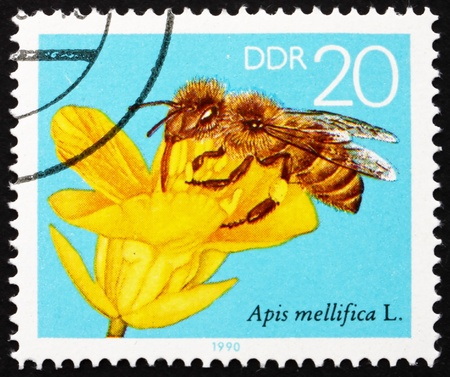 GDR - CIRCA 1990: a stamp printed in GDR shows Rape Blossom, Bees Collecting Nectar, circa 1990