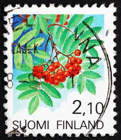 european rowan: FINLAND - CIRCA 1991: a stamp printed in the Finland shows European Rowan Fruit, Sorbus Sorbus, circa 1991
