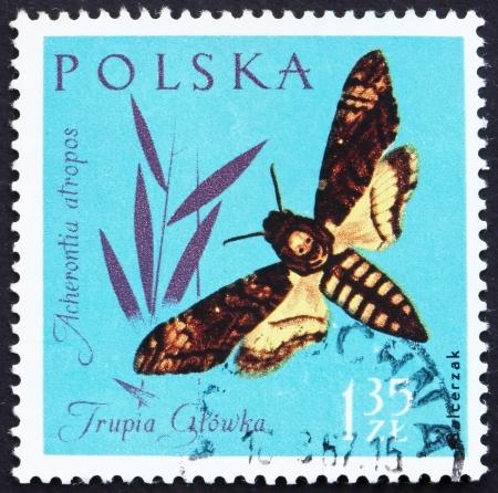 POLAND - CIRCA 1961: a stamp printed in the Poland shows Death�s- head Moth, Acherontia Atropos, Insect, circa 1961
