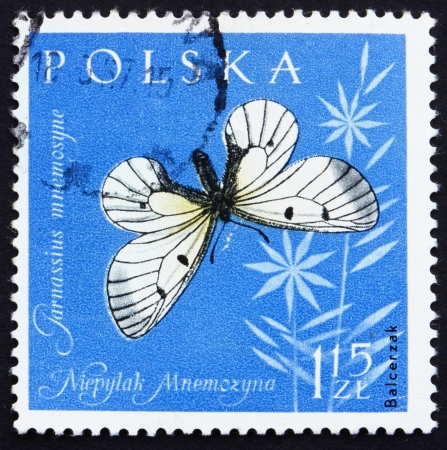 POLAND - CIRCA 1961: a stamp printed in the Poland shows Black Apollo Butterfly, Clouded Apollo, Parnassius Mnemosyne, circa 1961 Stock Photo - 14418728