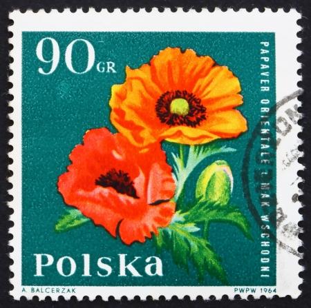 oriental poppy: POLAND - CIRCA 1964: a stamp printed in the Poland shows Oriental Poppy, Garden Flower, circa 1964