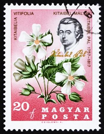 pal: HUNGARY - CIRCA 1967: a stamp printed in the Hungary shows Pal Kitaibel, botanist, chemist, and Kitaibelia Vitifolia, circa 1967 Editorial