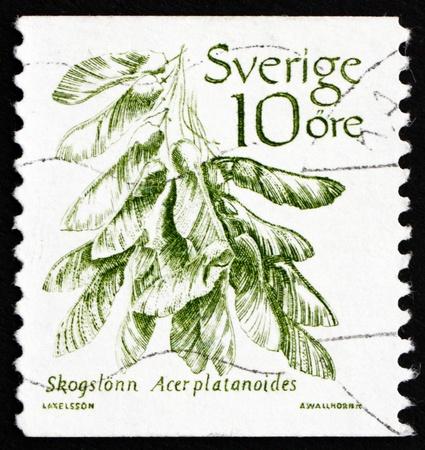 acer platanoides: SWEDEN - CIRCA 1983: a stamp printed in the Sweden shows Norway Maple, Acer Platanoides, Tree, circa 1983
