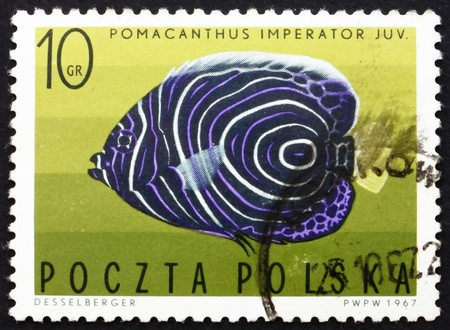 POLAND - CIRCA 1967: a stamp printed in the Poland shows Imperial Angelfish, Tropical Fish, circa 1967 Stock Photo - 14514414