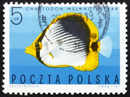 POLAND - CIRCA 1967: a stamp printed in the Poland shows Striped Butterflyfish, Tropical Fish, circa 1967 Stock Photo - 14514412