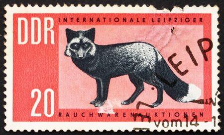 silver fox: GDR - CIRCA 1963: un sello impreso en la RDA muestra Silver Fox, Vulpes Vulpes, alrededor del a�o 1963