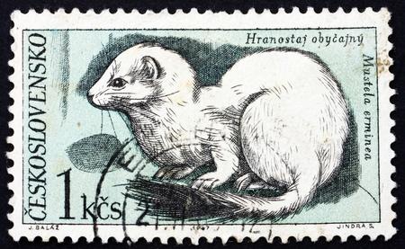 ermine: Checoslovaquia - CIRCA 1967: un sello impreso en la Checoslovaquia muestra armi�o, Mustela erminea, animal del Parque Nacional de los Tatras, alrededor del a�o 1967