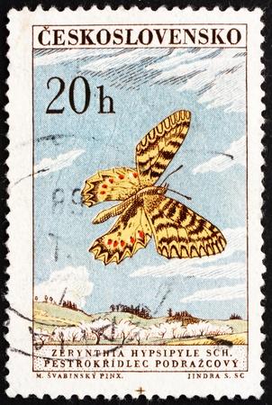 CZECHOSLOVAKIA - CIRCA 1961: a stamp printed in the Czechoslovakia shows Southern Festoon, Butterfly, Zerynthia Hypsipyle Schulze, Zerynthia Polyxena, circa 1961