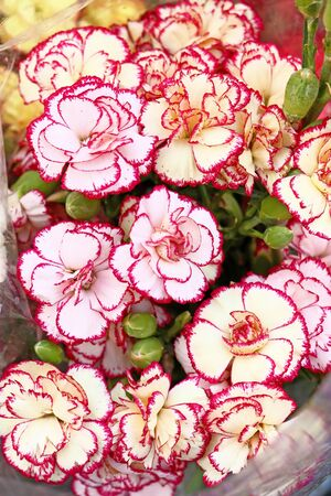 Bouquet of beautiful white red carnation flowers photo
