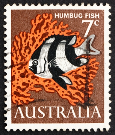 damselfish: AUSTRALIA - CIRCA 1966: a stamp printed in the Australia shows Humbug Fish, Dascyllus Melanurus, Blacktail Damselfish, Saltwater Aquarium Fish, circa 1966 Editorial
