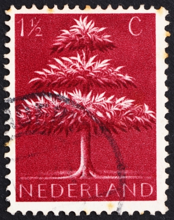 germanic: NETHERLANDS - CIRCA 1943: a stamp printed in the Netherlands shows Triple-crown Tree, Old Germanic Symbol, circa 1943