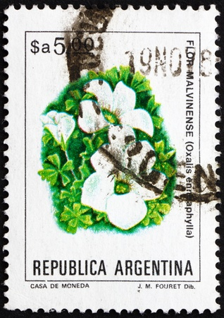 ARGENTINA - CIRCA 1983: a stamp printed in the Argentina shows Scurvy-grass Sorrel, Oxalis Enneaphylla, plant, circa 1983 Stock Photo - 15102152