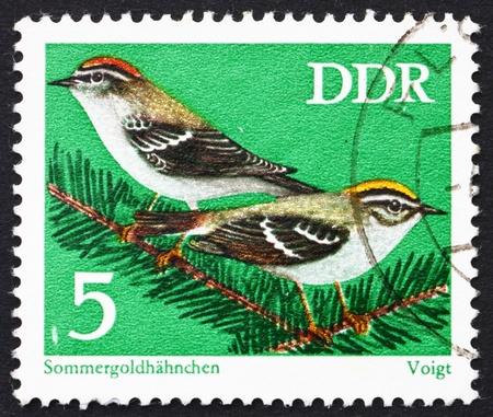passerine: GDR - CIRCA 1973: un timbro stampato in GDR mostra Firecrests, Regulus Ignicapilla, Passerine uccelli, circa 1973
