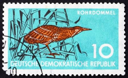 bittern: GDR - CIRCA 1959: a stamp printed in GDR shows Bittern, Wading Bird, Wildlife Protection, circa 1959