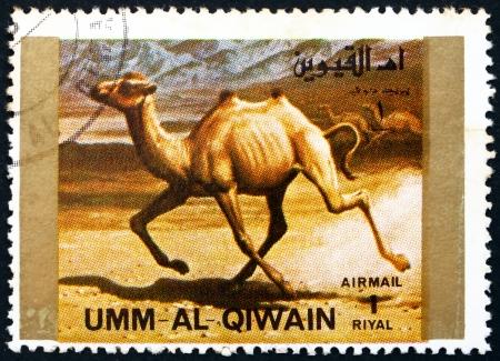 camel post: UMM AL-QUWAIN - CIRCA 1972: a stamp printed in the Umm al-Quwain shows Camel, Animal, circa 1972