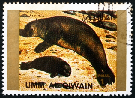 umm: UMM AL-QUWAIN - CIRCA 1972: a stamp printed in the Umm al-Quwain shows Seal, Animal, circa 1972 Editorial