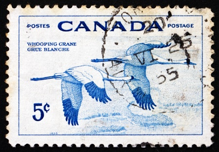 whooping: CANADA - CIRCA 1955: a stamp printed in the Canada shows Whooping Cranes, National Wildlife Week, circa 1955