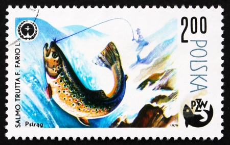 salmo: POLAND - CIRCA 1979: a stamp printed in the Poland shows Trout, Salmo Troutta F. Fario L., Fish, Centenary of Polish Angling, Protection of Environment, circa 1979 Editorial