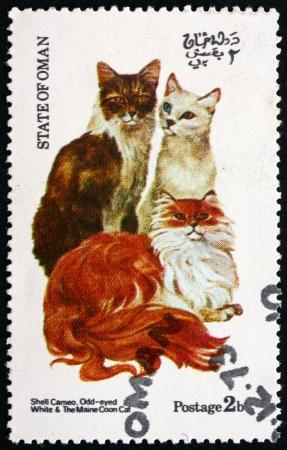 OMAN - CIRCA 1973: un timbre imprimé dans l'État d'Oman montre Shell Entré, Odd-eyed blanc et le Maine Coon, vers 1973