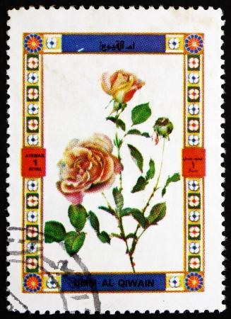 umm: UMM AL-QUWAIN - CIRCA 1972: a stamp printed in the Umm al-Quwain shows Rose variety, Flower, circa 1972