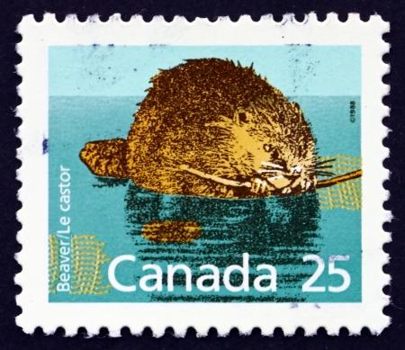 CANADA - CIRCA 1988: a stamp printed in the Canada shows Beaver, Castor, Animal, circa 1988