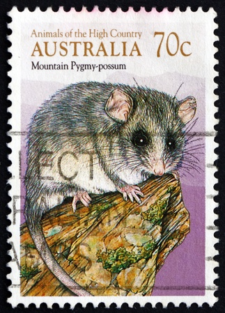 marsupial: AUSTRALIA - CIRCA 1990: a stamp printed in the Australia shows Mountain Pygmy Possum, Burramys Parvus, Marsupial Mammal, circa 1990 Editorial