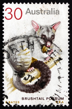 vulpecula: AUSTRALIA - CIRCA 1974: a stamp printed in the Australia shows Common Brushtail Possum, Trichosurus Vulpecula, Marsupial Mammal, circa 1974