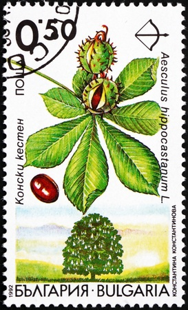 BULGARIA - CIRCA 1992: a stamp printed in the Bulgaria shows Horse Chestnut, Aesculus Hippocastanum, Deciduous Tree, circa 1992 Stock Photo - 17044875