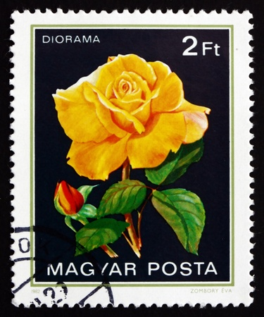 diorama: HUNGARY - CIRCA 1982: a stamp printed in the Hungary shows Diorama, Rose Flower, circa 1982