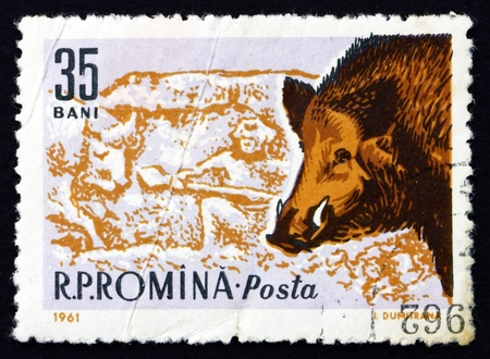 ROUMANIE - CIRCA 1961: un timbre imprimé en Roumanie montre Sanglier, Sus scrofa, Animal, circa 1961