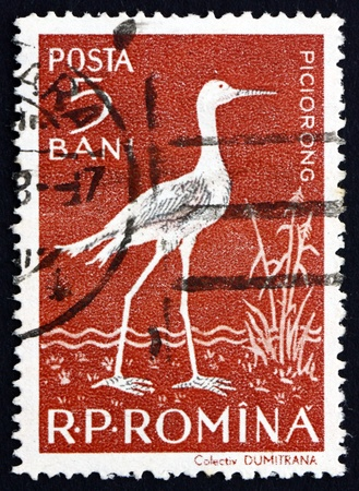 wader: ROMANIA - CIRCA 1957: a stamp printed in the Romania shows Black-winged Stilt, Himantopus Himantopus, Wader Bird, circa 1957