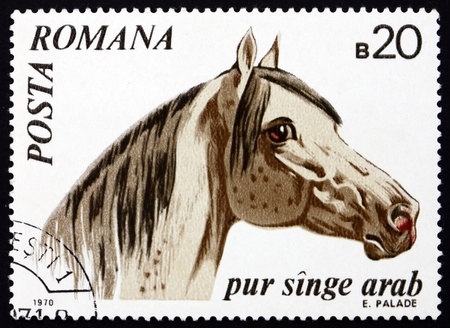 ROMANIA - CIRCA 1970: a stamp printed in the Romania shows Arabian Thoroughbred, Horse, Equus Ferus Caballus, Animal, circa 1970 Stock Photo - 17145045