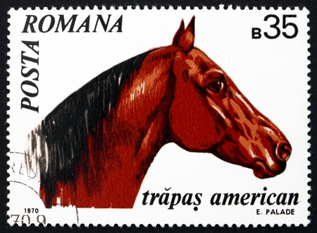 ROMANIA - CIRCA 1970: a stamp printed in the Romania shows American Trotter, Horse, Equus Ferus Caballus, Animal, circa 1970 Stock Photo - 17145038