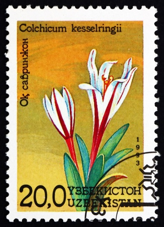 UZBEKISTAN - CIRCA 1993: a stamp printed in Uzbekistan shows Autumn Crocus, Colchicum Kesselringii, Flower, circa 1993 Stock Photo - 17145051