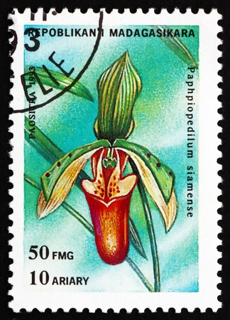 lady's slipper: REPUBLICA MALAGASY - CIRCA 1993: a stamp printed in the Malagasy (Madagascar) shows Lady�s Slipper, Paphiopedilum Siamense, Orchid, circa 1993