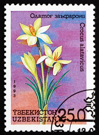 UZBEKISTAN - CIRCA 1993: a stamp printed in Uzbekistan shows Crocus, Crocus Alatavicus, Flower, circa 1993 Stock Photo - 17145062