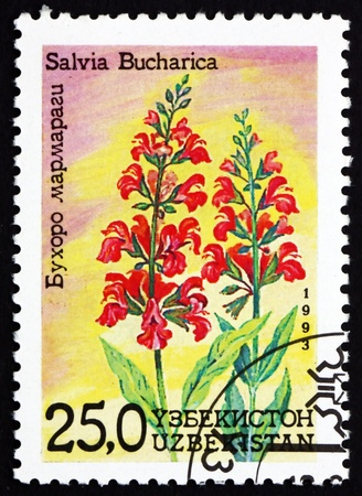 UZBEKISTAN - CIRCA 1993: a stamp printed in Uzbekistan shows Sage, Salvia Bucharica, Flower, circa 1993 Stock Photo - 17145049