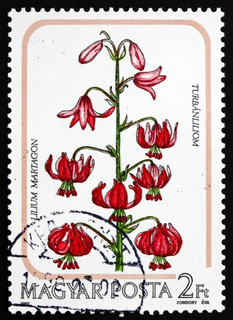 HUNGARY - CIRCA 1985: a stamp printed in the Hungary shows Martagon, Turk�s Cap Lily, Lilium Martagon, Flower, circa 1985 Stock Photo - 17262537