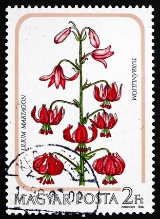turks: HUNGR�A - CIRCA 1985: un sello impreso en Hungr�a muestra Martagon, Cap Turcas Lily, Lilium Martagon, Flor, alrededor de 1985