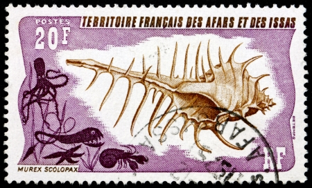 AFARS AND ISSAS - CIRCA 1975: a stamp printed in Afars and Issas shows False Venus Comb, Murex Scolopax, Sea Snail, circa 1975