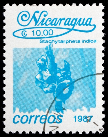 indian postal stamp: NICARAGUA - CIRCA 1987: a stamp printed in Nicaragua shows Indian Snakeweed, Stachytarpheta Indica, Flower, circa 1987