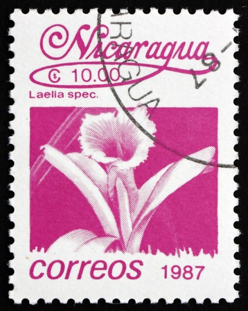mayflower: NICARAGUA - CIRCA 1987: a stamp printed in Nicaragua shows Mayflower Orchid, Laelia Speciosa, Orchid, Flower, circa 1987 Editorial