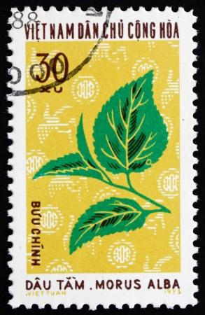 VIETNAM - CIRCA 1974: a stamp printed in Vietnam shows Mulberry Tree, Morus Alba, Industrial Plant, circa 1974 Stock Photo - 17523410