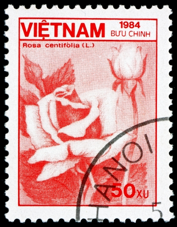 VIETNAM - CIRCA 1984: a stamp printed in Vietnam shows Cabbage Rose, Rosa Centifolia, Flower, circa 1984 Stock Photo - 17523420